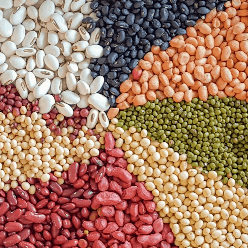 a pattern of colorful variety of dry beans
